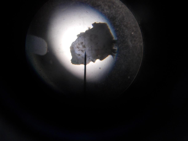D:\EPQ\Lichen pictures\after\DSCN0650.JPG